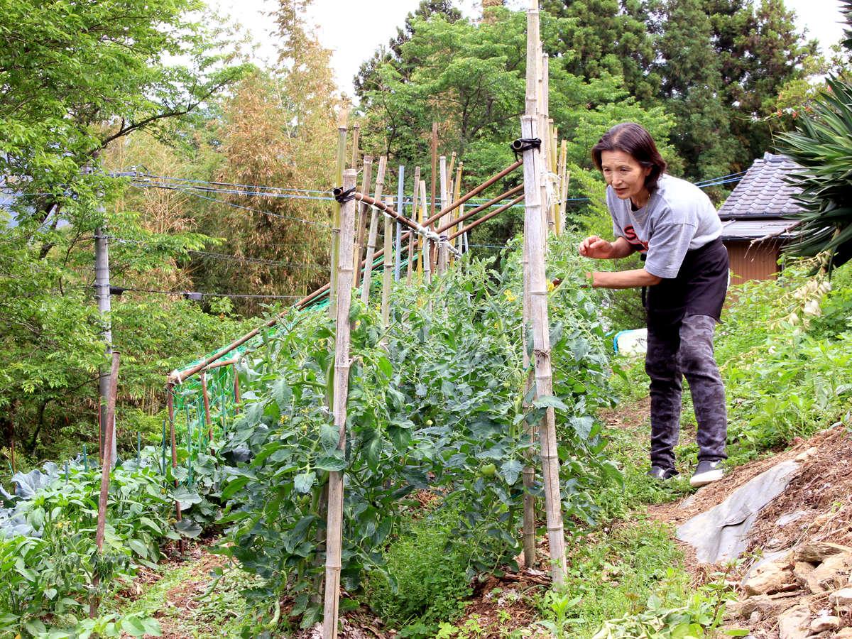 広~い自家菜園で季節ごとの野菜や果物、愛情いっぱい育ててます^^♪