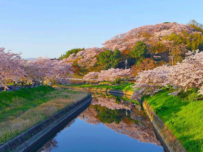 【三室山の桜(春)】和空法隆寺からほど近い、標高82mの小さな山、三室山は散策に手ごろなスポット。