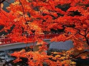 香嵐渓の紅葉風景です。秋には見逃せない、この景色!!