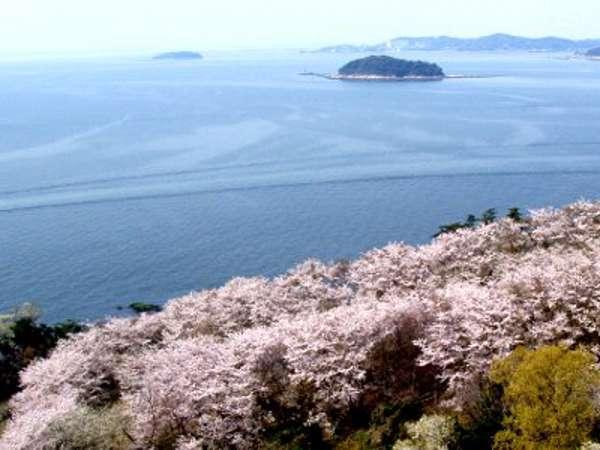 桜の穴場『西浦園地』は当館徒歩2分♪