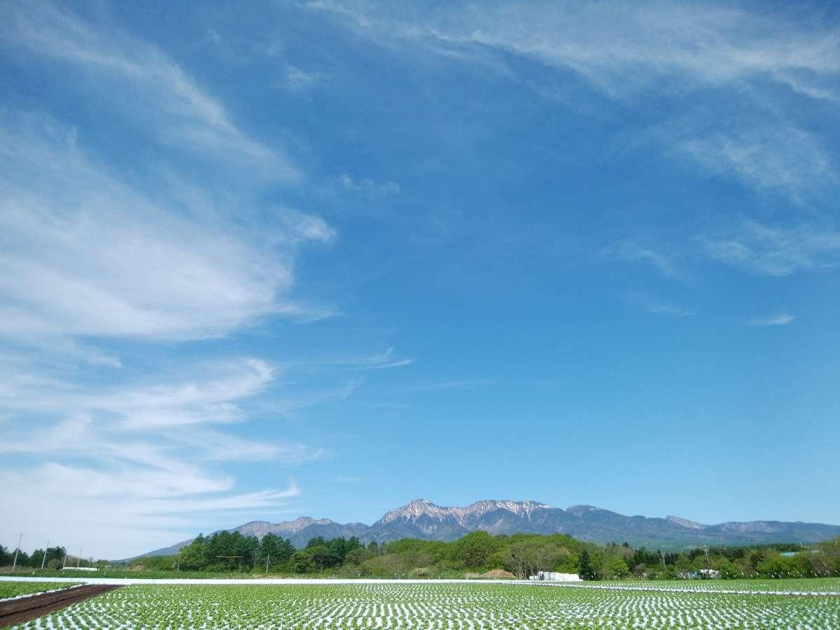 新緑の季節。散歩道からの高原野菜畑と八ヶ岳。