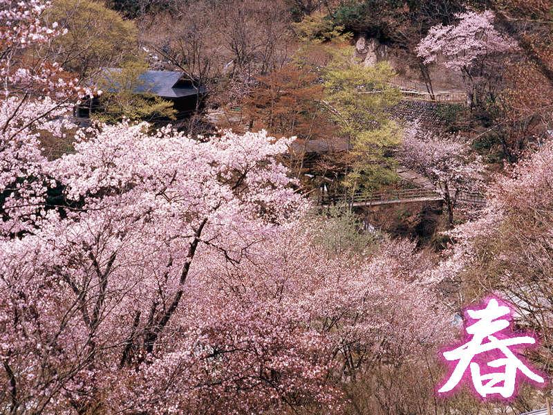 【春】~桜咲く汪泉閣周辺の景観~