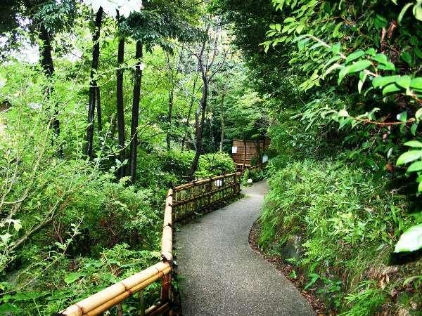 *敷地内。森の小道を歩くだけで、森林浴を楽しめます。