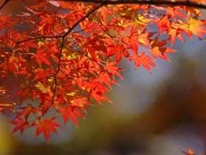 ■寒暖差が生み出す信州の美しい紅葉