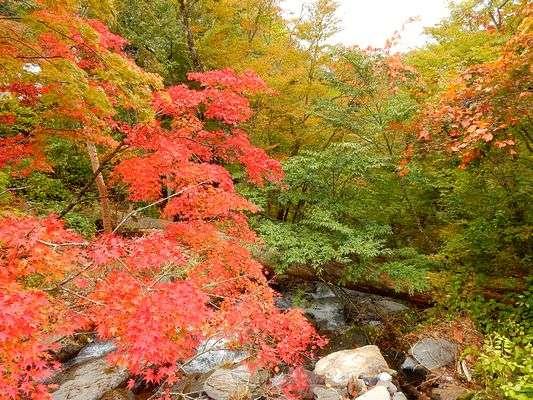 *日塩もみじラインにある白滝付近の紅葉が見ごろとなりました。(2015/10/10撮影)