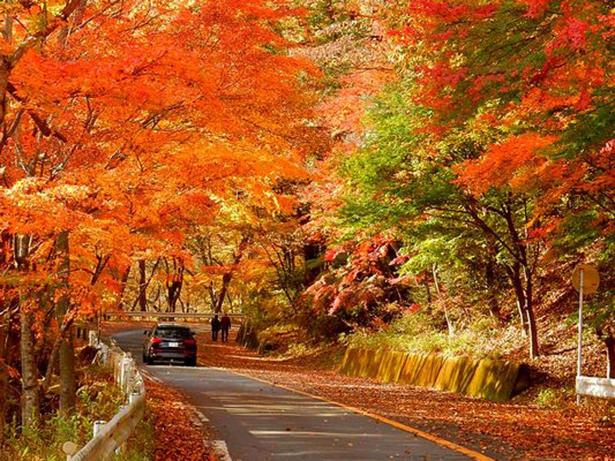 今塩原で一番美しい紅葉が見れるのが大正浪漫街道(旧国道400号線)です。【撮影:2015/11/10】