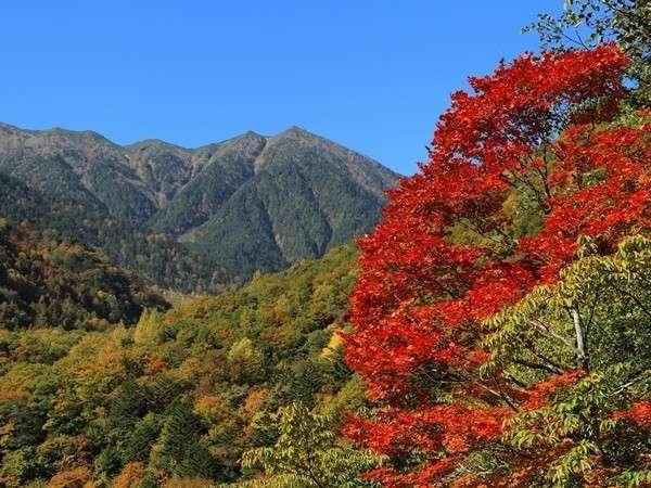 【常念岳登山口一ノ沢の紅葉】見頃は10月中旬
