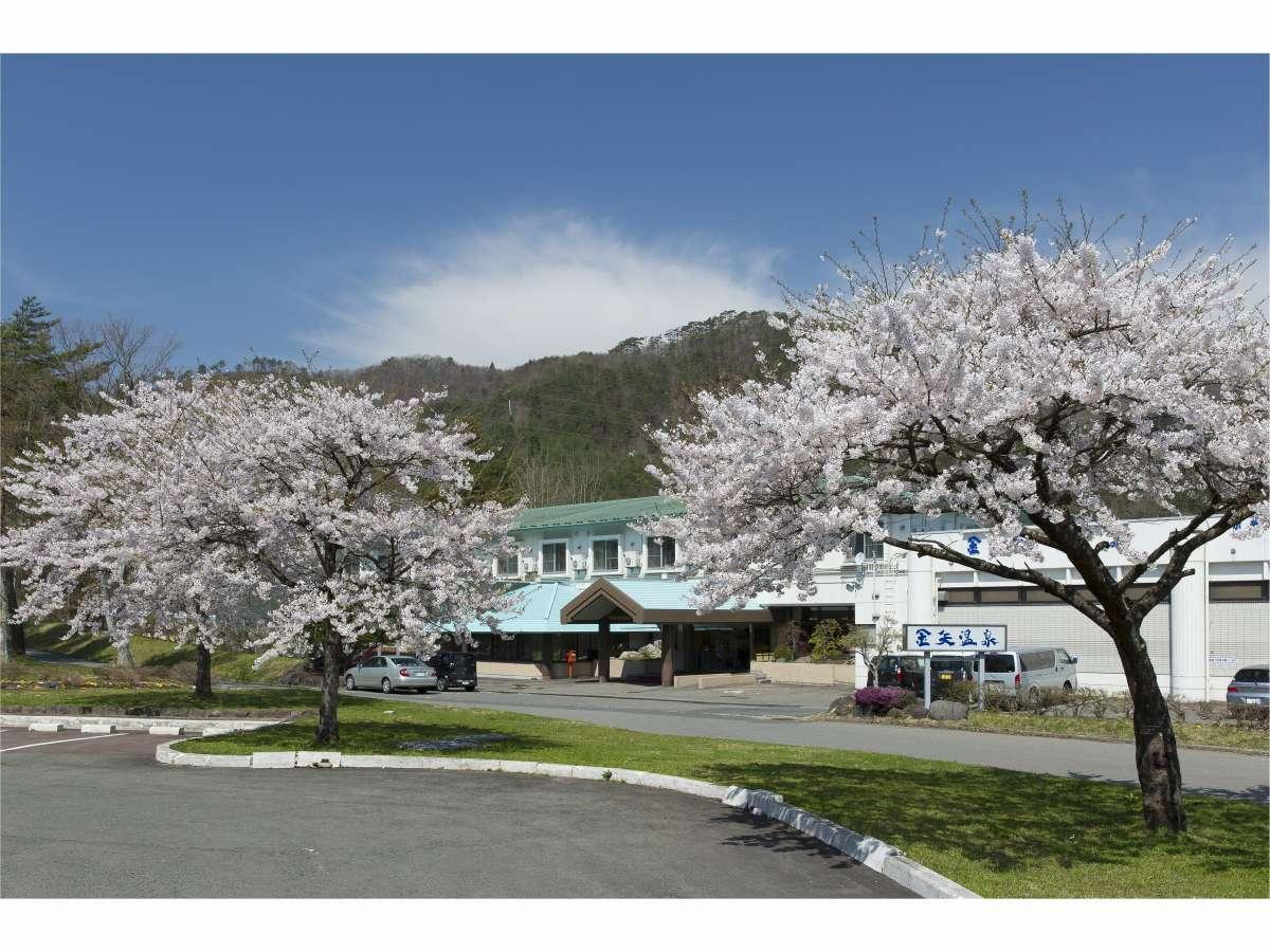 金矢温泉 桜