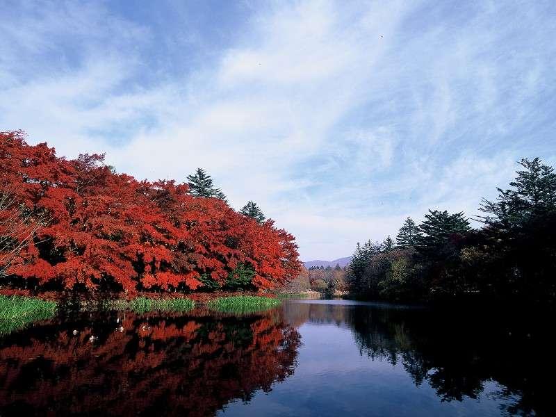 ■紅葉の雲場池 お車で約10分