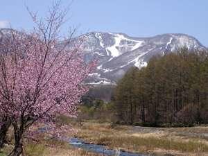 山桜咲く会津高原