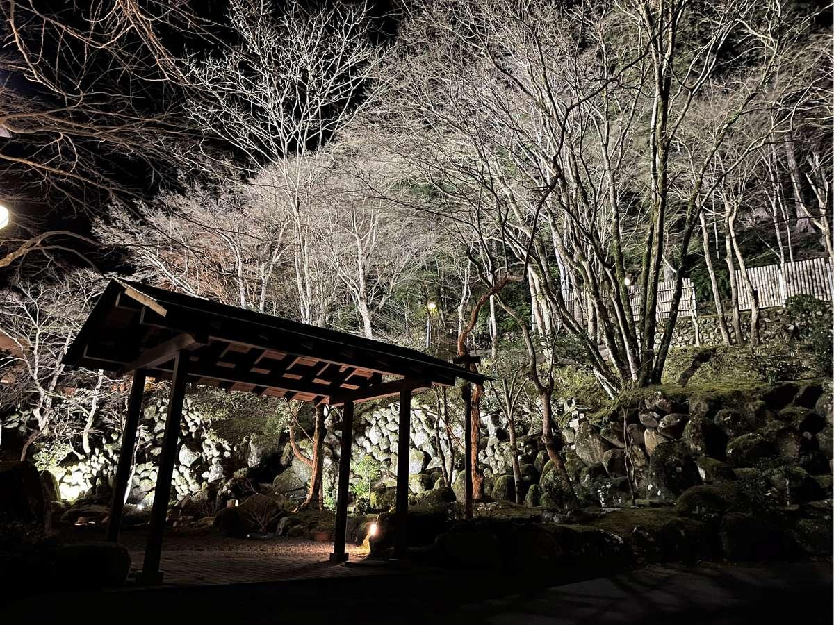 白木の木々が夜の庭園を輝かせる(冬イメージ)