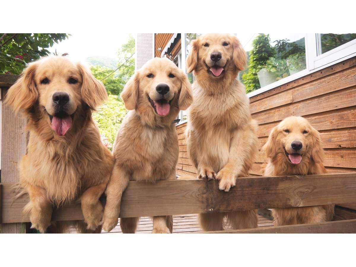 看板犬4頭が皆様をお出迎えいたします!