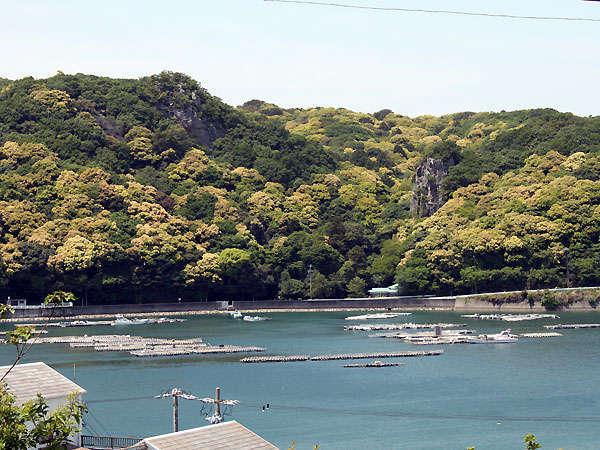 新緑がまぶしい生の浦湾の海景色