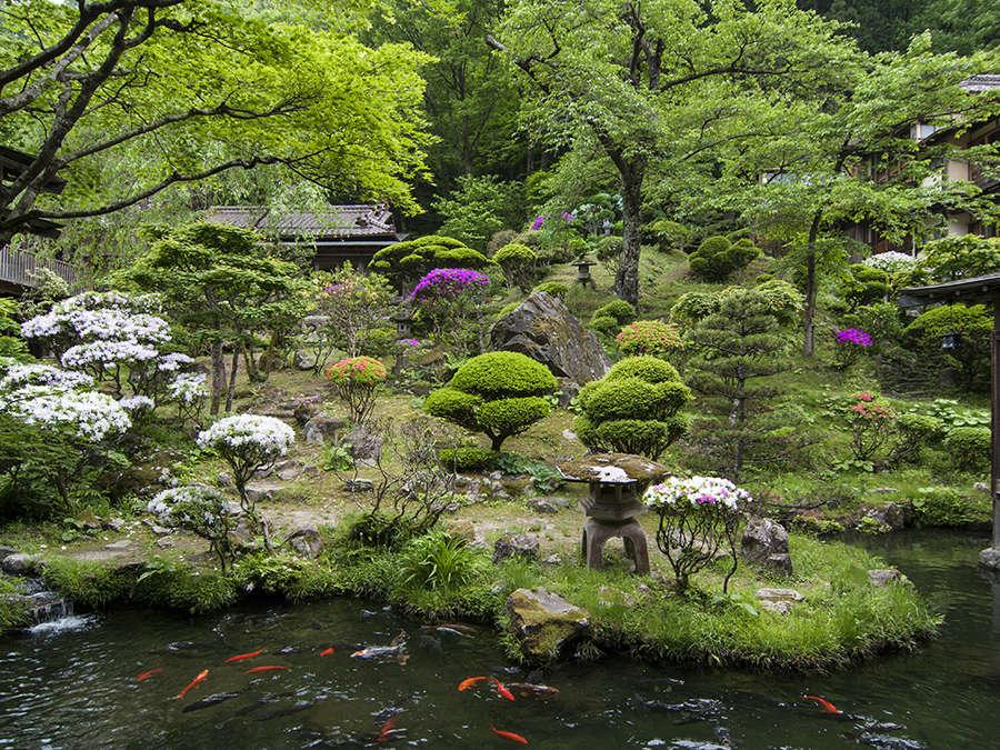 皐月 つつじと鯉 鮮やか天然色の中庭、回遊式日本庭園です