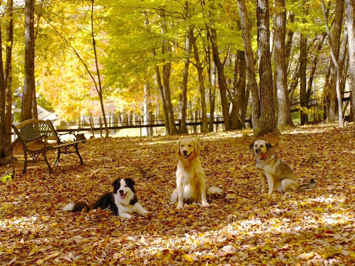 森のドッグガーデンの秋は紅葉が綺麗♪