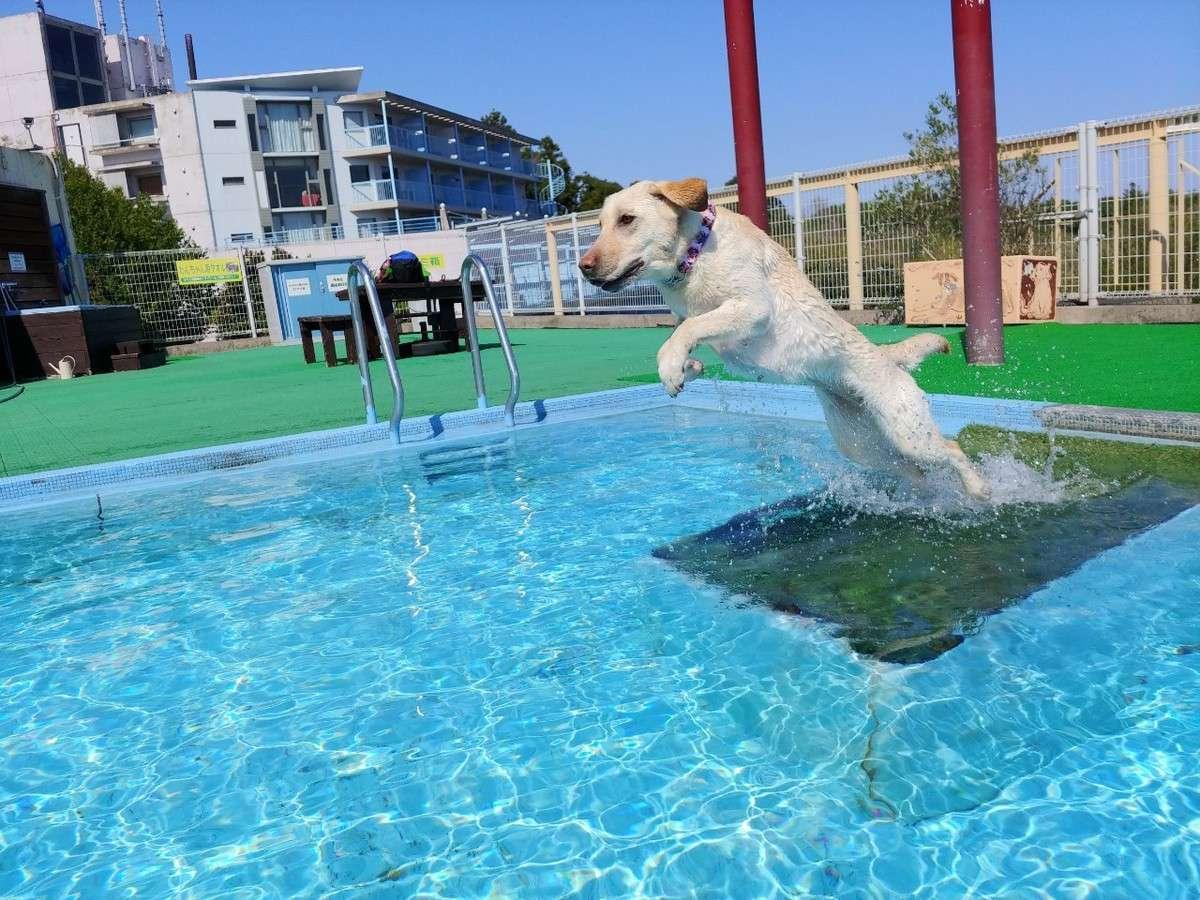 【わんちゃん専用プール】プール遊びにわんちゃん大喜びです♪