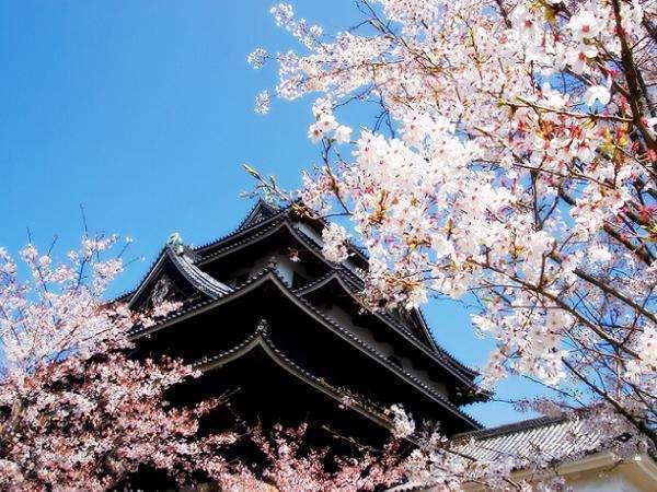 桜の季節の松江城散策もおすすめです♪