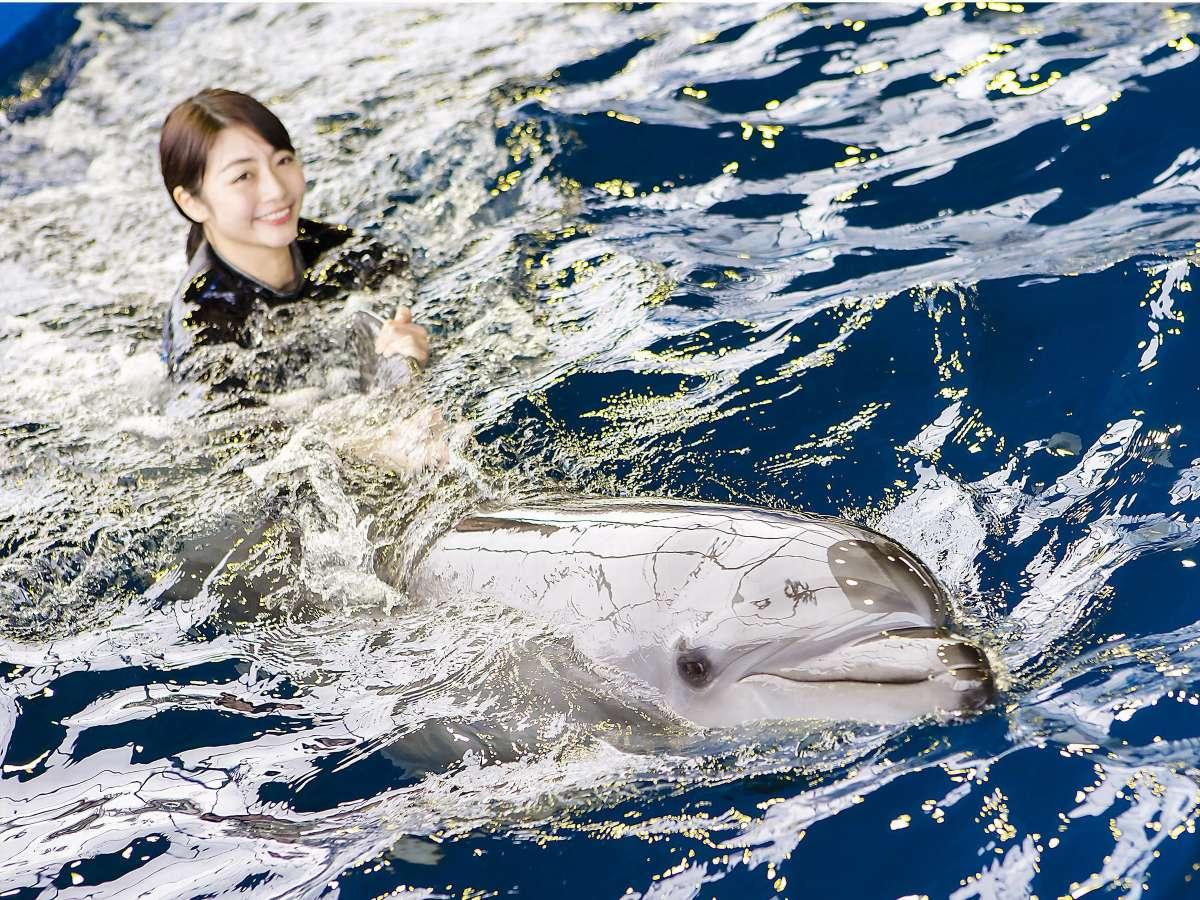 <イルカランド>イルカの尾びれにつかまって一緒に泳ごう♪