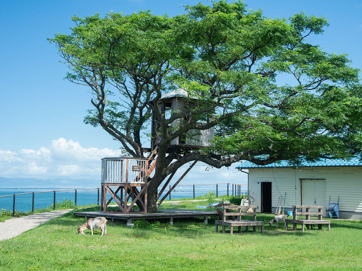 *【校庭/ツリーハウス】大きな木の下で涼む、ユッくんとパカさん