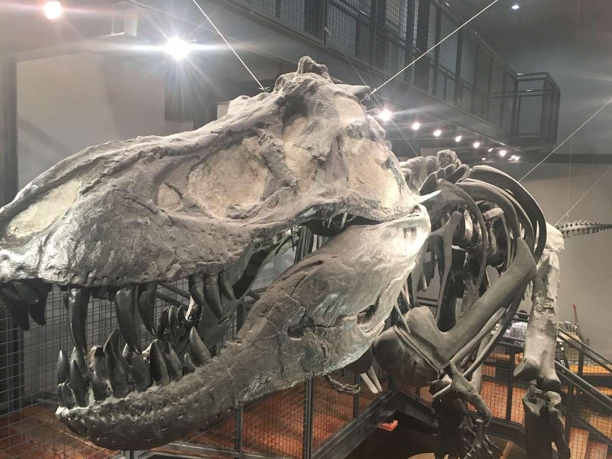 福井にある福井県立恐竜博物館