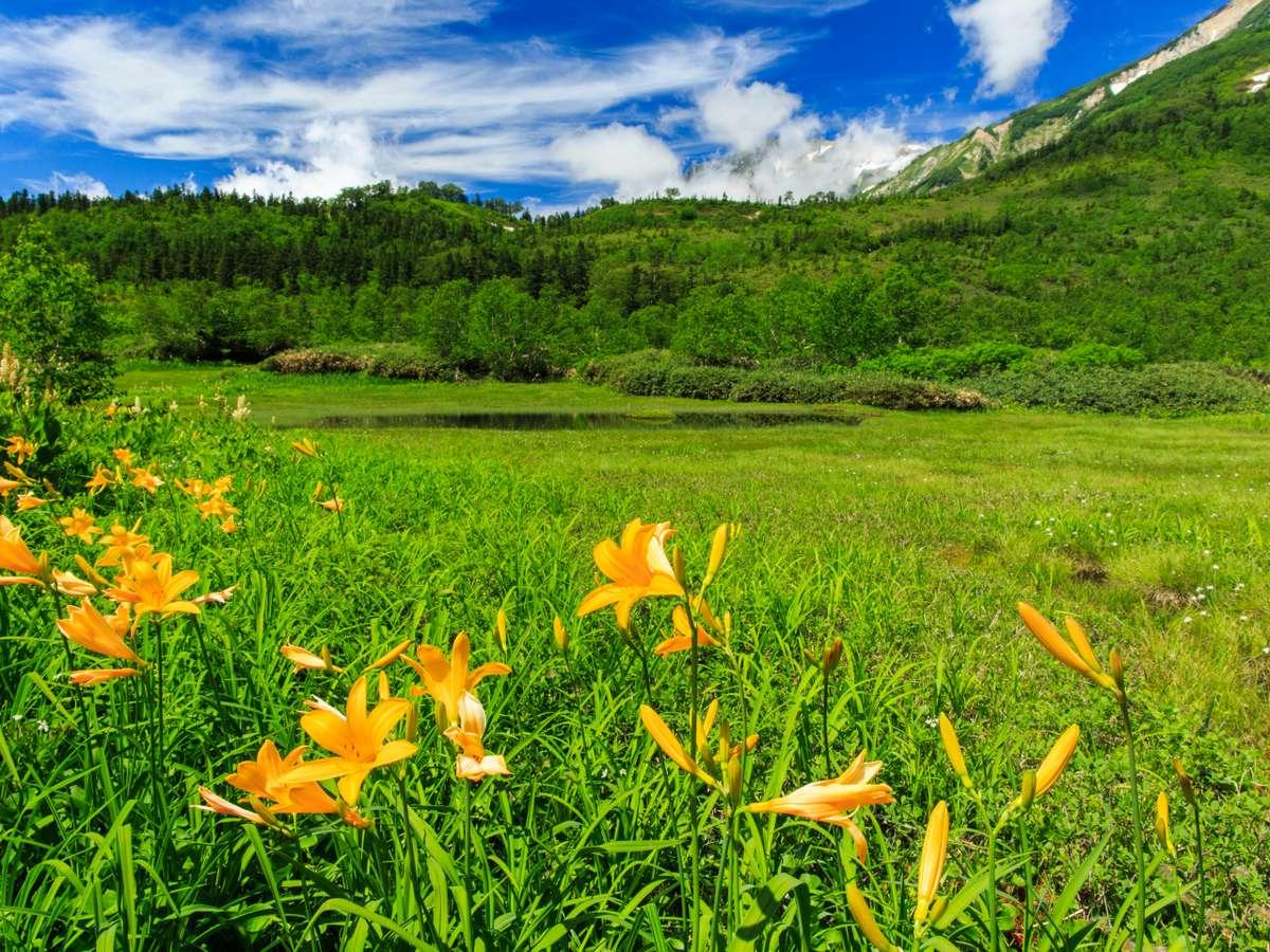 栂池自然園「ニッコウキスゲの群生」
