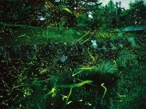 ホタルが鑑賞できる竹亭より徒歩5分の湯郷温泉、大谷川