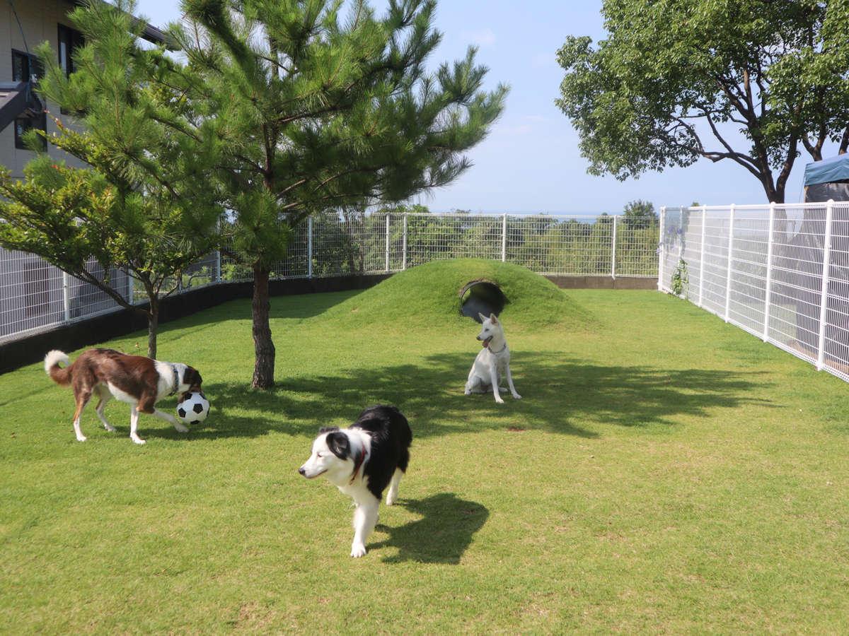 コテージ横の全面芝生ドッグラン