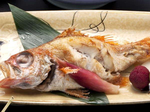 日本海の高級魚、脂ののりは最高です