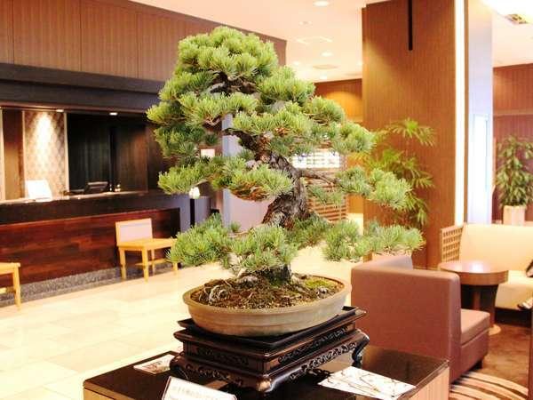 盆栽のまち「大宮」を代表する当ホテルでは、ロビーに週替わりで盆栽の展示も。画像は五葉松