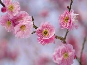 熱海梅園■梅まつり新春は花を愛でる旅へ