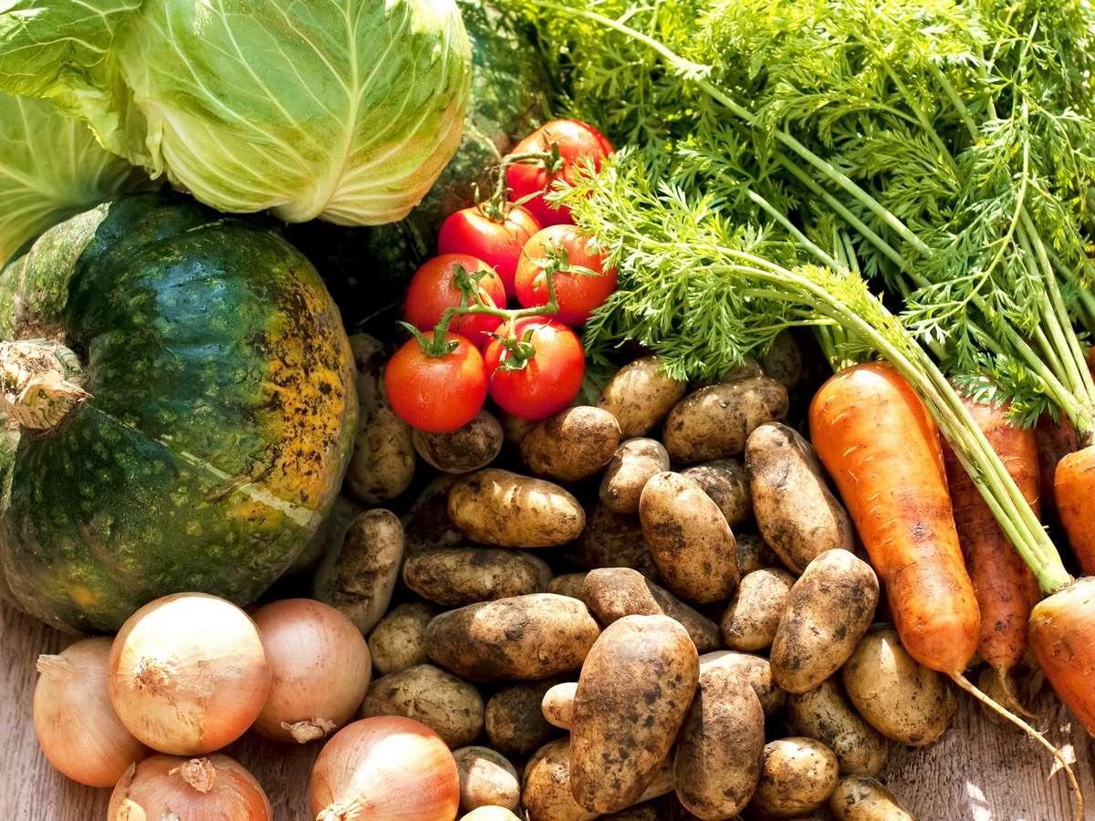 【野菜のこだわり】北国野菜の旬を知り尽くした担当者が、こだわりの食材を仕入れ