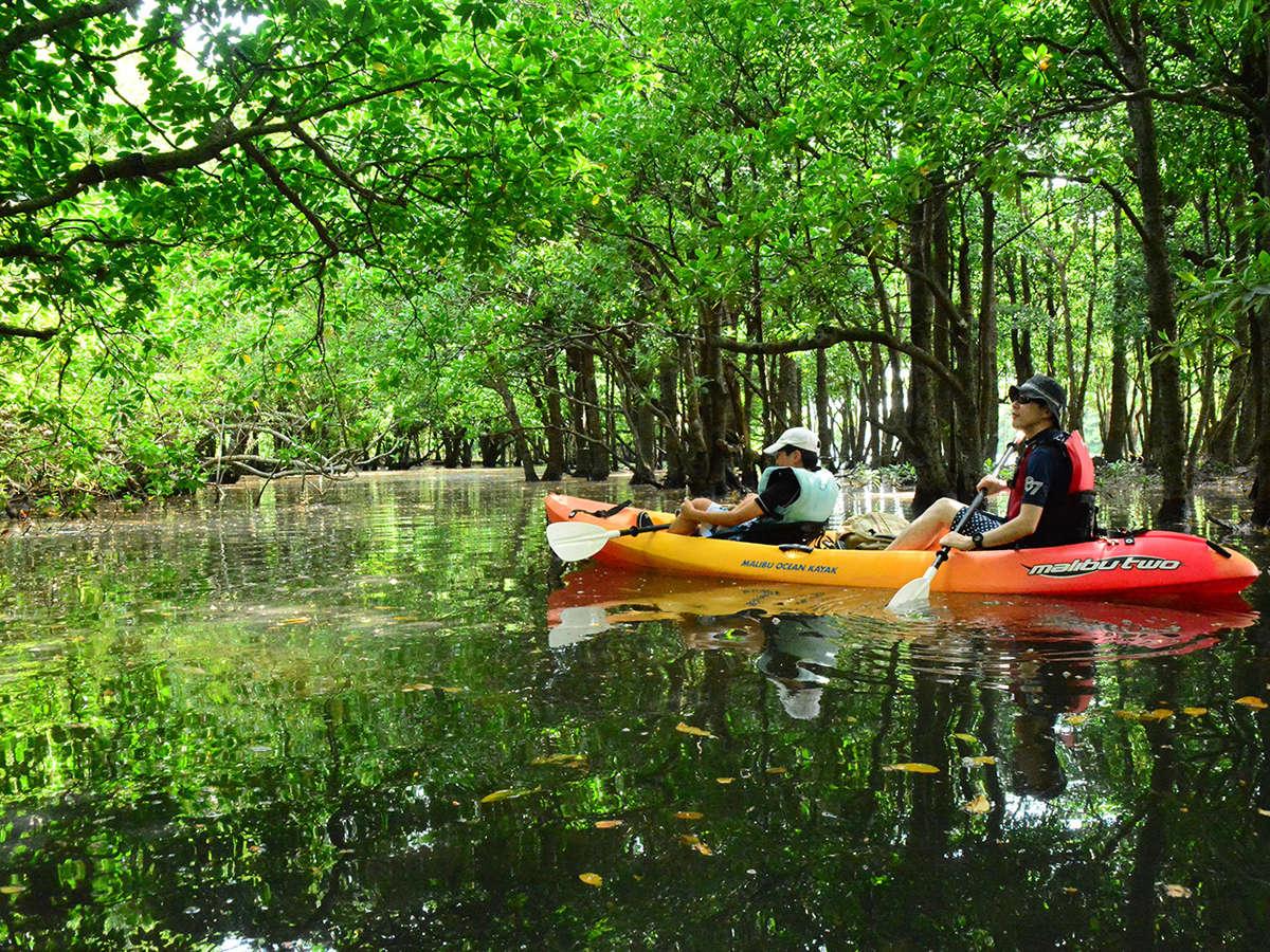 *カヌー体験/美しいマングローブの中をゆっくりと進みます。