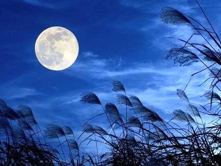【月がきれいな秋の夜長】