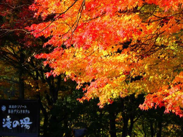 10月後半から11月にかけて、滝の湯周辺の木々が見事に色付きます。