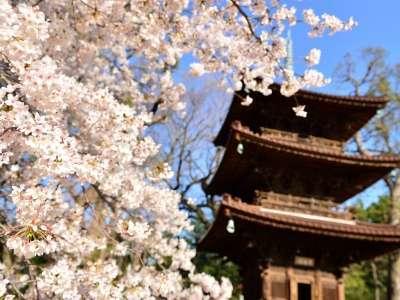 ホテル椿山荘東京の三重塔と桜