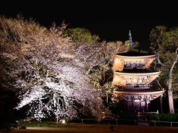 ホテル椿山荘東京の三重塔と夜桜のライトアップ