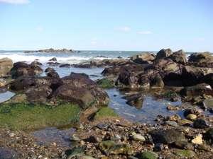 ◆とらや旅館目の前の磯 旅館前の階段を下りればすぐ磯です。春の海は気持ちいい!是非お越しを!