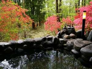 囲いもなく、ただ自然を愛でる露天風呂。運がよければ猿や鹿も顔を出しますよ♪