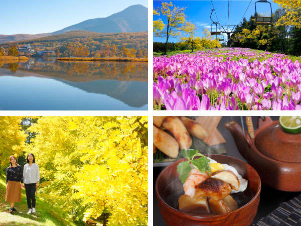 秋を彩る白樺湖