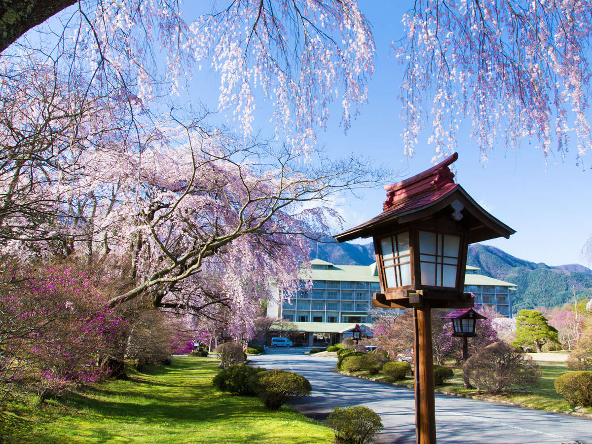 桜の美しいピンク色に包まれた当館