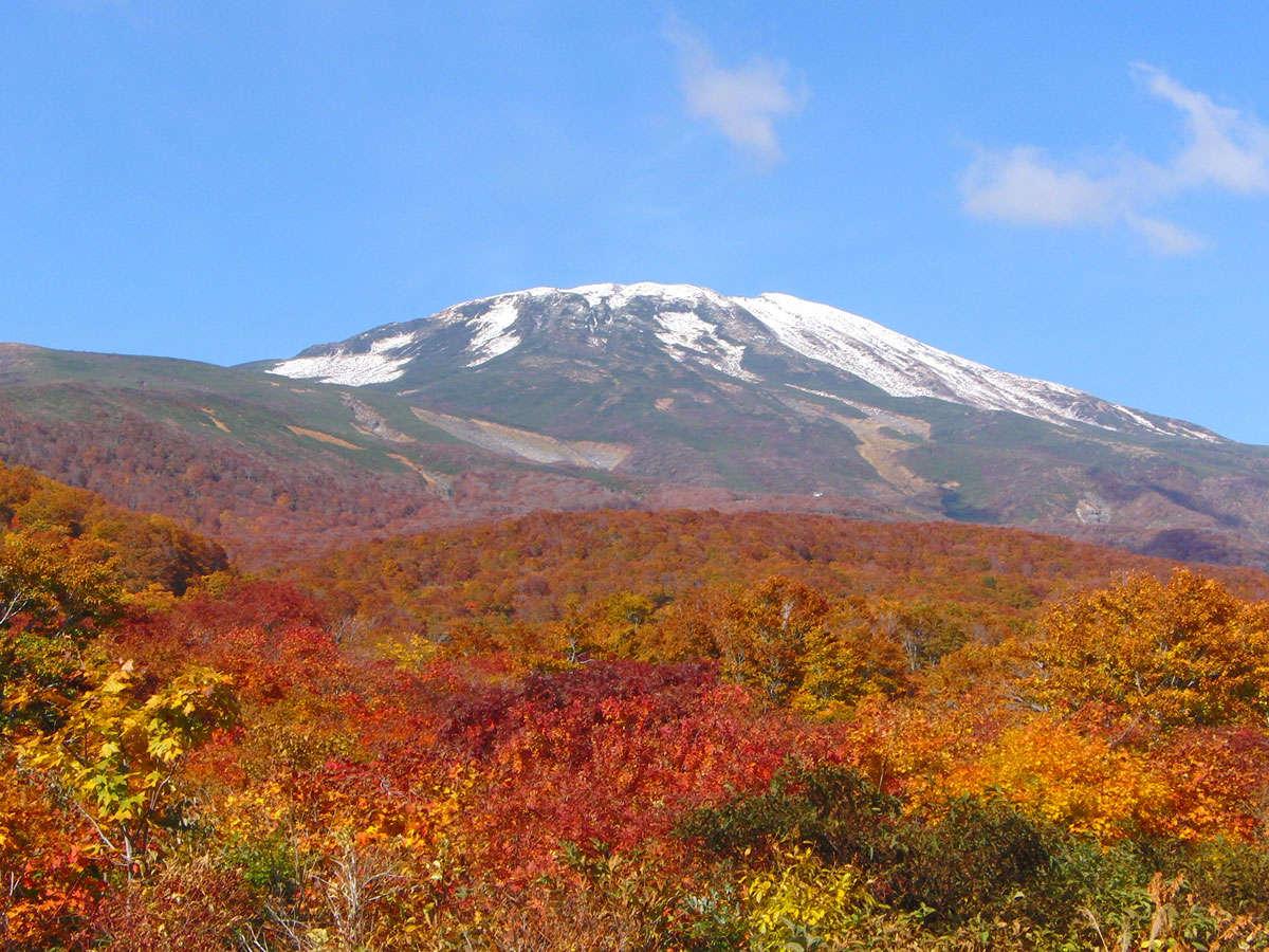 *紅葉の見頃は例年10月中旬~下旬/薄っすら雪化粧した鳥海山と紅葉を望む、この時期ならではの景観。
