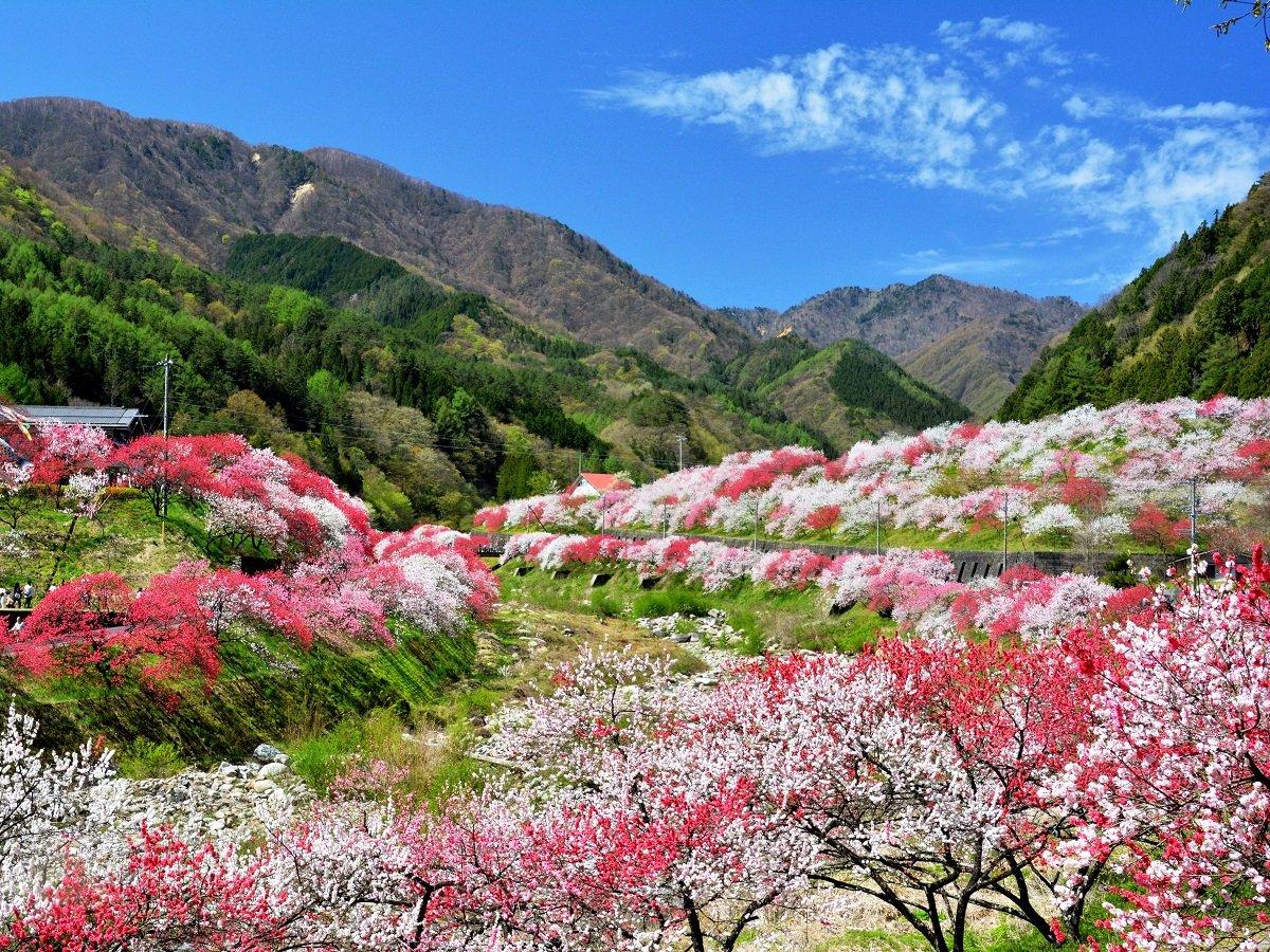 花桃の里全景
