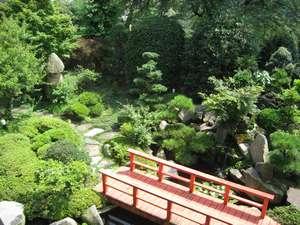よく手入れされた、日本庭園。池にはたくさんの鯉がゆうゆうと泳いでいる