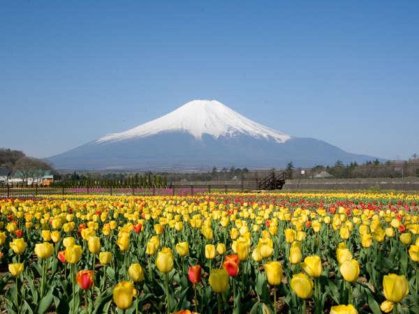 *春の花の都公園~10万本のチューリップが咲きます♪4月下旬~5月上旬