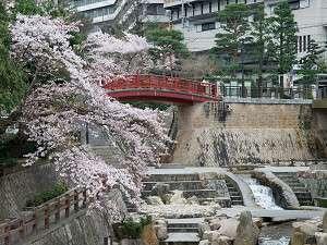 ねね橋付近桜風景【4月初旬が見頃です】