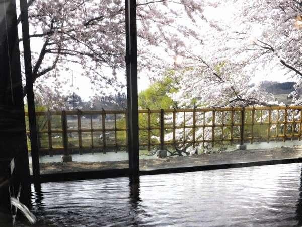 【館内大浴場から見える春桜】