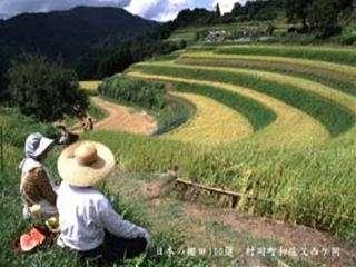 愛情いっぱいに育てられた『村岡米』も間もなく収穫時期を迎え、新米がいよいよ登場!!