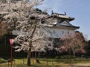 但馬の小京都と呼ばれる趣のある出石の街並みを見渡せる出石城址!桜が舞い散る様は何とも風流です
