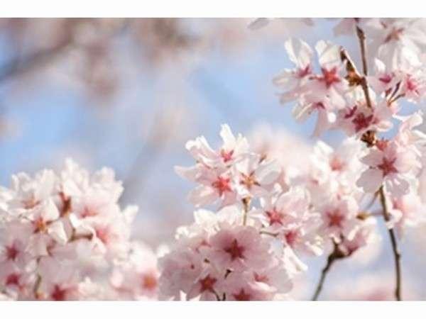 春の季節到来♪晴れやかな気持ちで新たな門出を♪