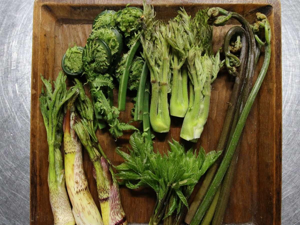 旬の朝採り山菜(4月末~6月上旬)